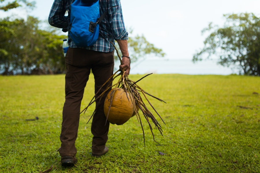 farmer carrying coconuts in dominican republic
